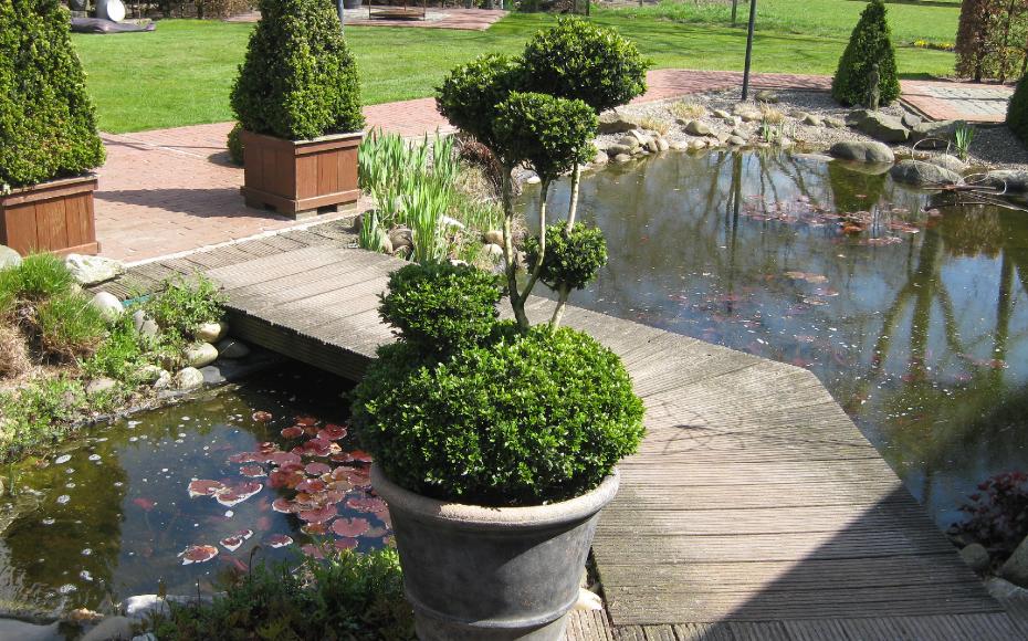 Buxus bollen op stam - Taxus Loverbos